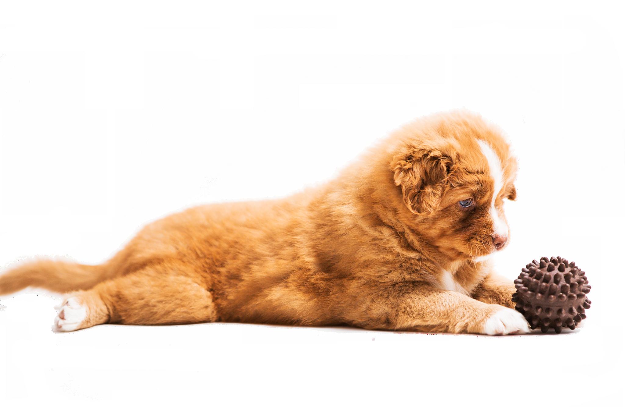 štěně 3