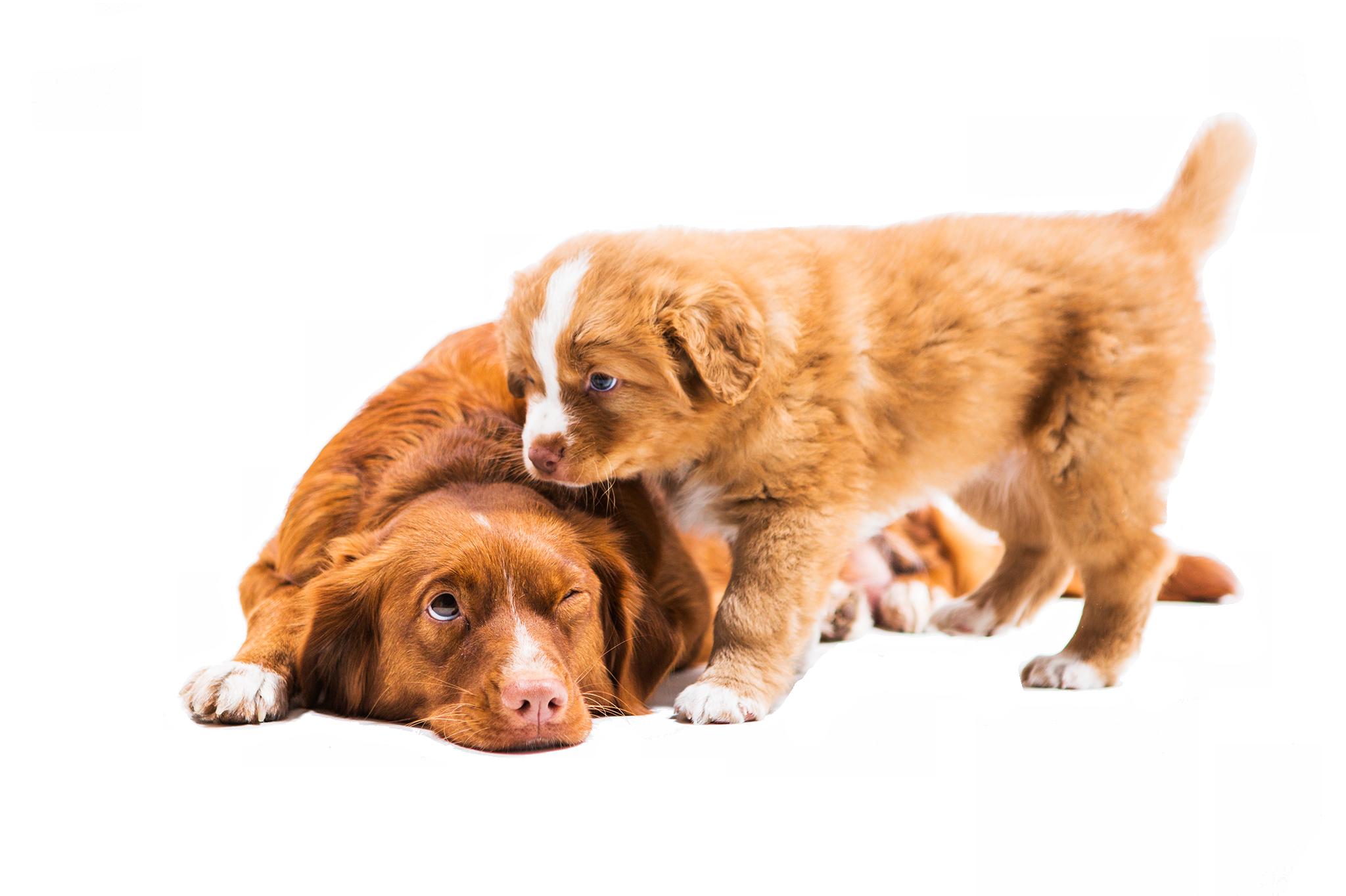 Nany a štěně